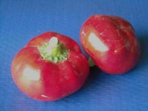 Topeto Rosso 5