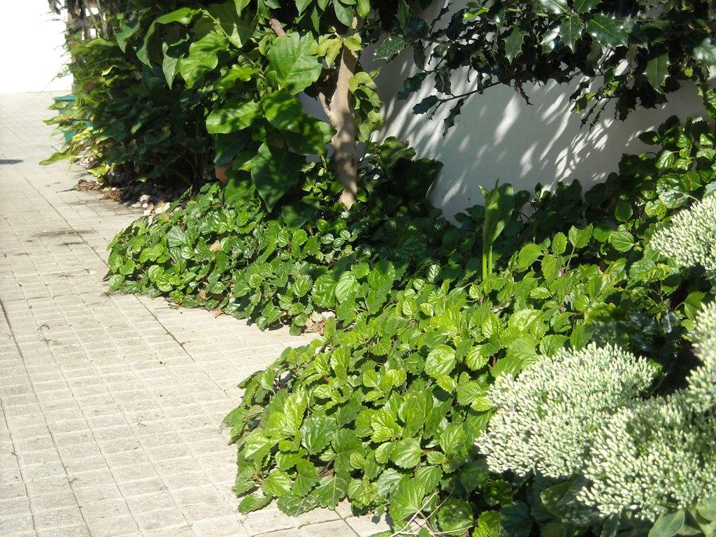 jardim de pedra  Jardim de Lomar