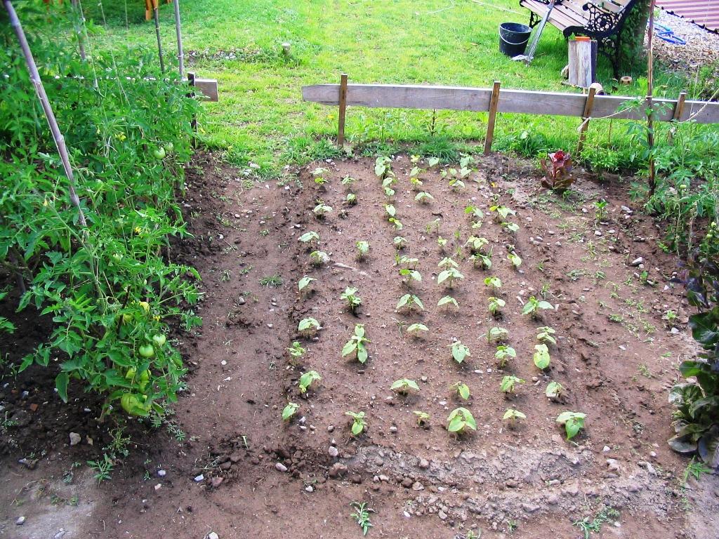 pequena horta no jardim : pequena horta no jardim ? Doitri.com